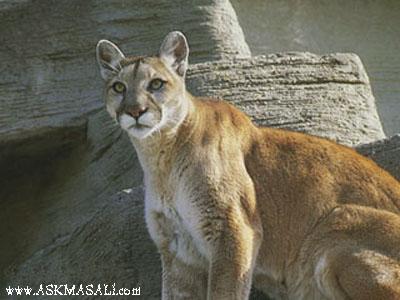 hayvan resimleri hayvanlar resimler hayvan resmi ekartlar�