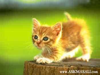 hayvan resimleri hayvanlar resimler hayvan resmi e-kart� ekartlar�