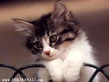 hayvan resimleri hayvanlar resimler hayvan resmi e-kart ekartlar�
